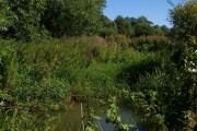 River Roding?