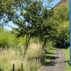 Thames Path Link