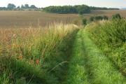 Farmland and copse, Allington