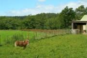 Pony At Midfleenas
