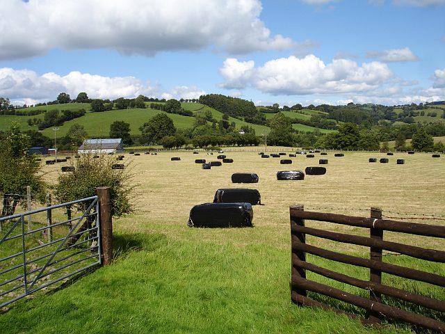 Silage bales at Bryn-Elen-fâch