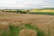 Barley, Bankhead