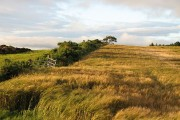 Barley, Wellbog