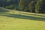 Pastures near Wargrave