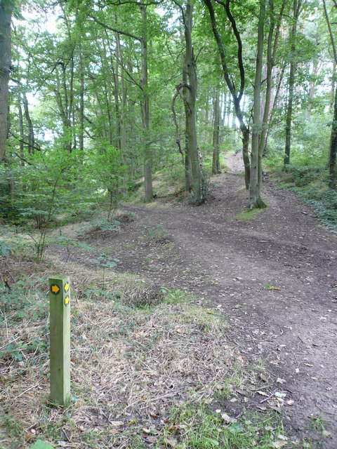 Footpath Junction Entering Smeekley Wood