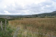 Wheat field near Parrog