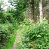 Back Dog Woods