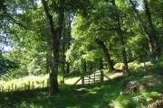 Coed Dolmelynllyn woodlands
