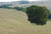 Farmland, Forston