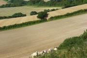 Farmland, Godmanstone