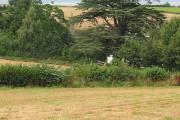 Farmland near Peterstow