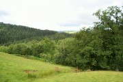 Forest and dingle