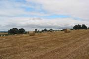 Crop field near Townsend Farm