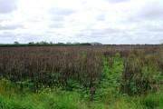 Farmland from Babcary access road