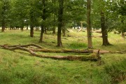 Gooseleach Wood