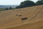 Harvested farmland, Cerne Abbas