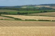 Harvested farmland, Godmanstone