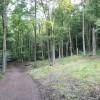 Linacre - Beech Wood