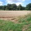 Wheat field near Homend Park
