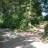 Dappled shade at Capler Wood