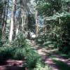 Track through Capler Wood