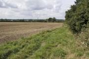 Field margin, Brand's Farm
