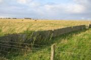 Grazing land near Achreamie