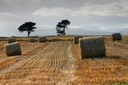 Straw Bales near Clach a' Charridh