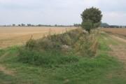 Large fields
