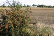 Farmland, Knight's End, March, Cambs