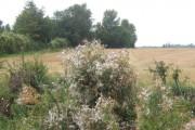 Wild strip between fields