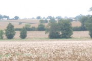 Zoom on to stubble fields dotted with trees