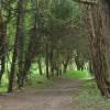 Oldlands Wood