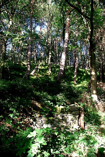 Dappled shade in Smeekley Wood