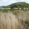 The track towards Smeekley Wood