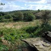 Towards Smeekley Wood