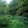 Track below Smeekley Wood
