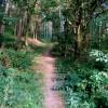 Track through coniferous woodland
