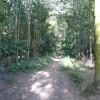 Walton Woods - Footpath