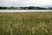 Aberlady: the Village From Across the Bay