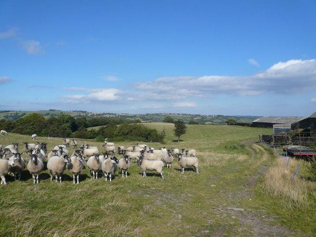Moorhall Farm Buildings and Sheep