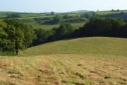 Hay meadow, Mapperton