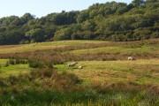 Pasture, Mapperton