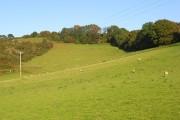 Pastures, Loscombe