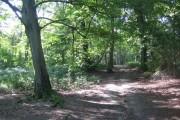 Hitch Wood