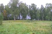 Woodland at Dunachton, Kincraig