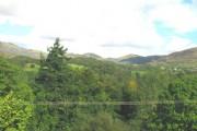 Roadside woodland on Allt Goch hill below Llan Ffestiniog