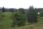 Open woodland at Kincraig