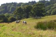 Pastures, Mapperton