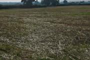 Haggs Farm fields